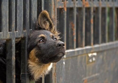 Krav för att adoptera ett djur från ett djurhärbärge