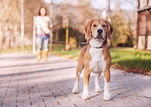 7 typer av hundkoppel och hur man använder dem