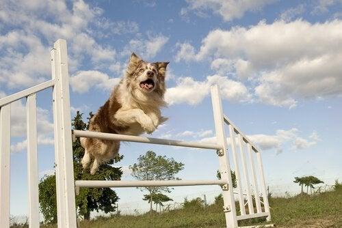 5 roliga och intressanta sporter för hundar