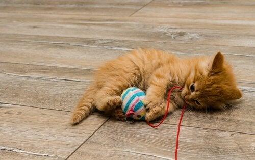 Hemmagjorda kattleksaker som är enkla att göra