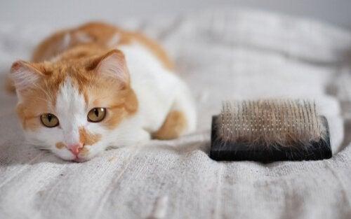 Katt som ligger i sängen.