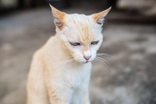 Katt som ser trött ut.