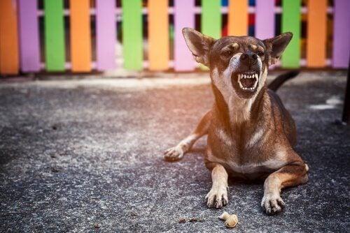 Hund visar tänderna