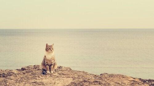 Katt på klippa