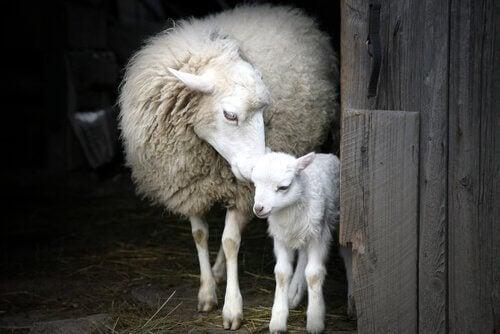 Den imponerande modersinstinkten hos djur