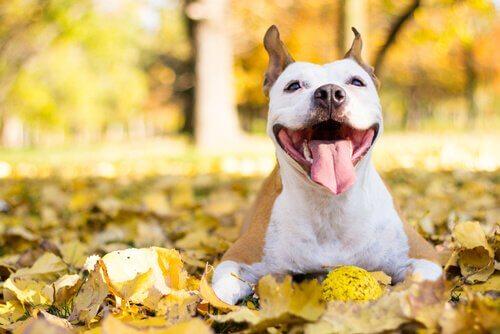 Glad hund bland löv.