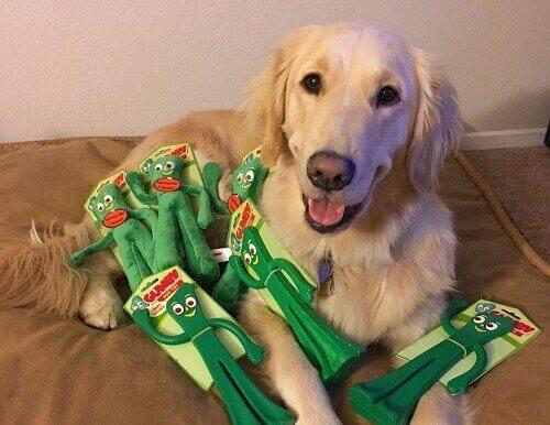 Hund reagerar på ägare utklädd som dess favoritleksak Gumby