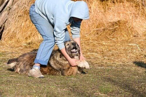Hund som ligger på marken.