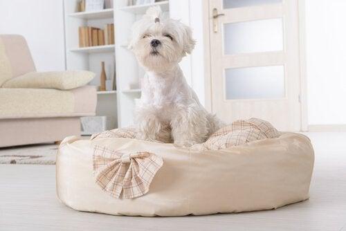Hund som sitter på sin säng.