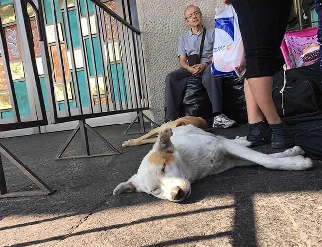 Hund som sover utanför kyrka.