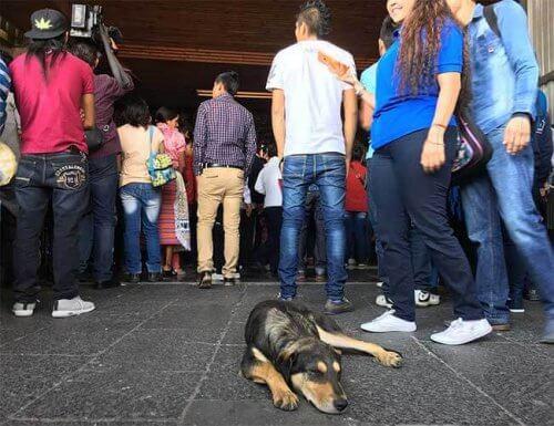 Övergivna hundar vid Guadalupebasilikan i Mexiko