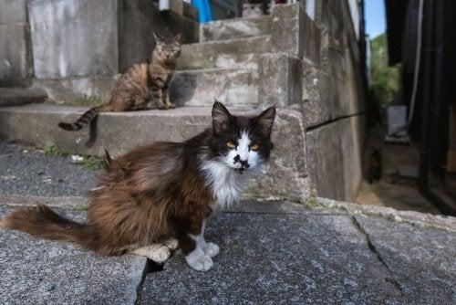 Kattpopulation på kattöar i Japan.