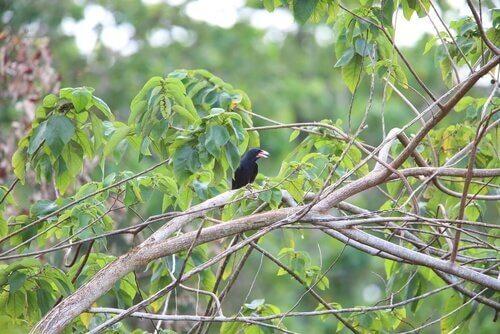 Kråka som sitter på gren.