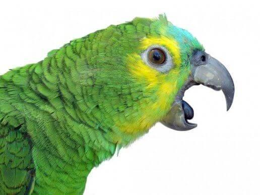 Grön papegoja