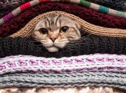 Katt bland varma filtar
