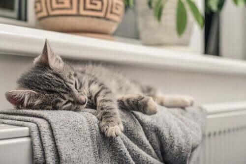 Katter kan uppfatta vad människor inte kan
