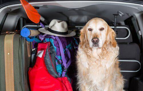 Stolsöverdrag för hundar i bilen: olika varianter
