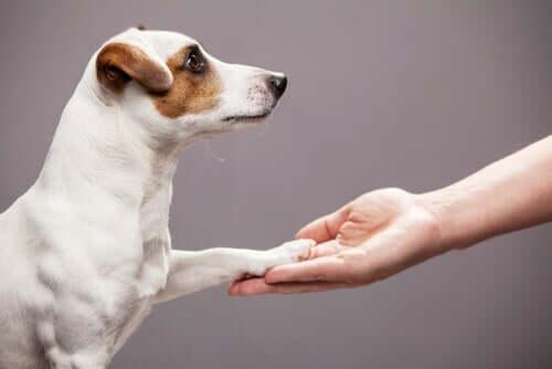 en hund som ger tass