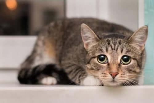 Vad finns det som katter är rädda för i omgivningen?