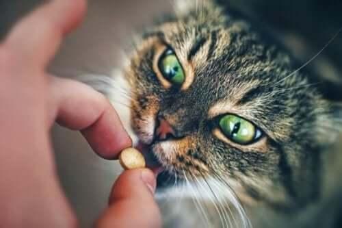 ge medicin till katt