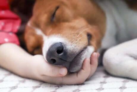 Sjuk hund i knä på sin ägare.