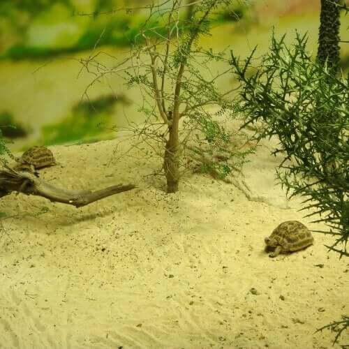 En sköldpadda vilar på sanden.