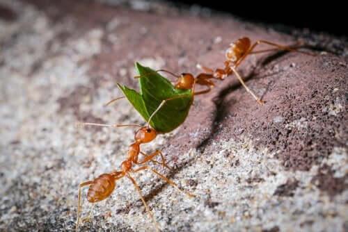 Människan uppfann inte jordbruket, det gjorde myrorna