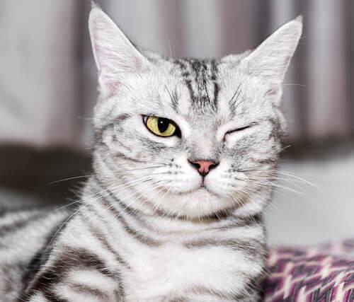 Ögonsjukdomar hos katter: förebyggande och vård