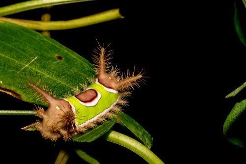 En färgglad larv