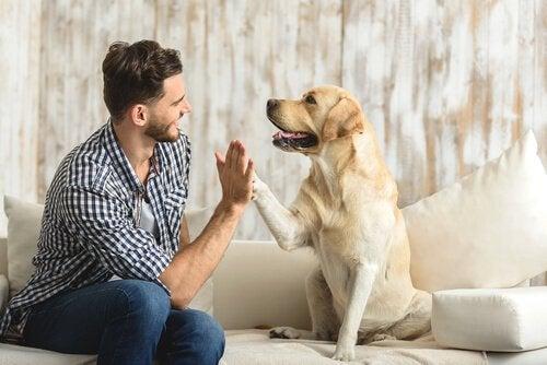Hund gör high five med ägare