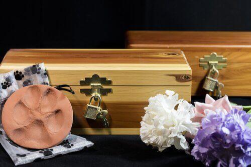 6 tips för hjälpa dig när ditt husdjur har dött