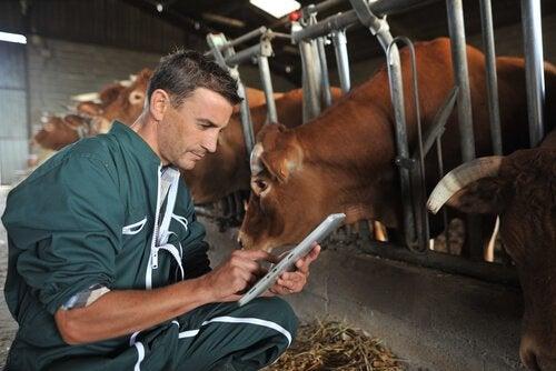 Applicering av parasitdödande medel för boskap