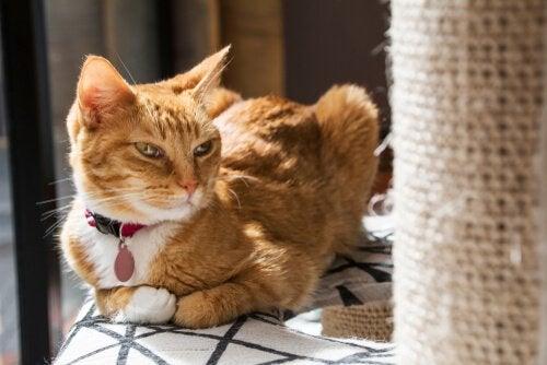 Vad gör man om ens katt inte gillar sitt klösträd?
