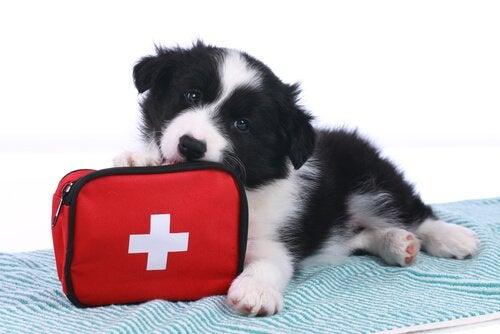 De vanligaste olyckorna bland husdjur
