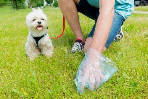 Ägare plockar upp hundbajs efter sin hund.