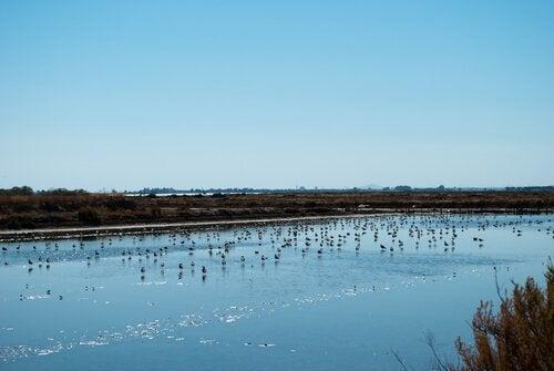 Fåglar vid flod.