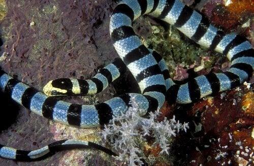Lär dig mer om de giftiga havsormarna