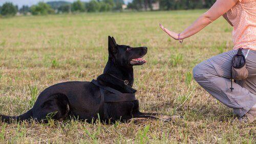 Hund sitter ner under en träningssession med sin ägare.