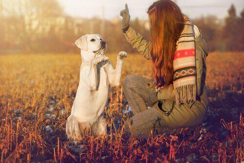Ägare tränar hund att sitta på bakbenen.