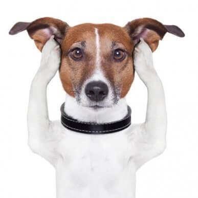 Det sjätte sinnet hos våra döva hundar