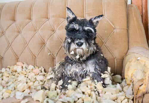 Rekommendationer för att minska stress hos hundar