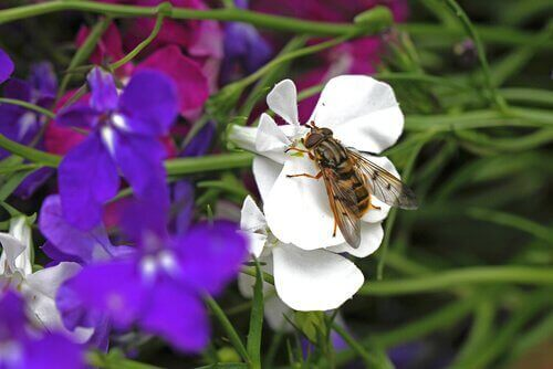 Stallfluga som sitter på blomma.