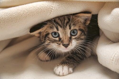 Träna din katt med en stor dos av tålamod