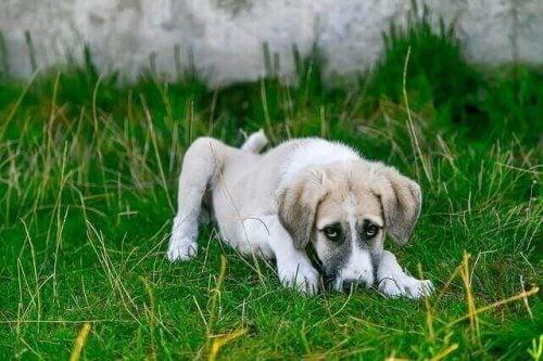 Lär dig att återställa ditt husdjurs tarmflora