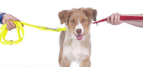 Delad vårdnad om husdjur: vad det är och hur det funkar