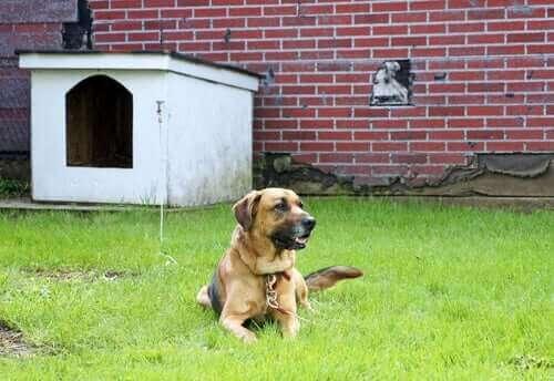 Hund fastbunden på gräsmatta