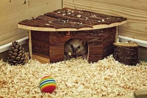 hem åt smådjur behöver ett hus