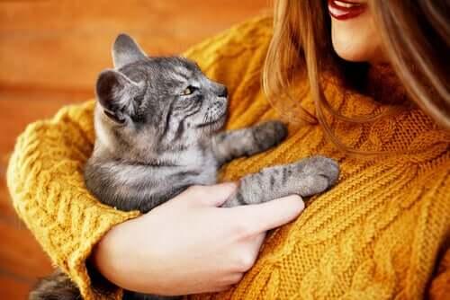 Katt får en kram