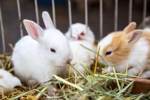Växter som du kan mata en kanin med