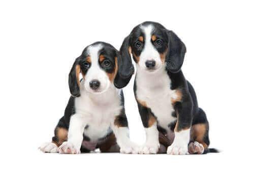 Två hundar tillsammans.